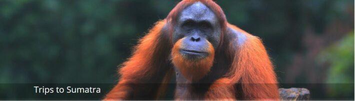 Trips to Sumatra